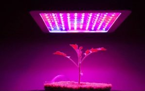 LED Grow Lights Technology Allow You to Grow Plants Indoor