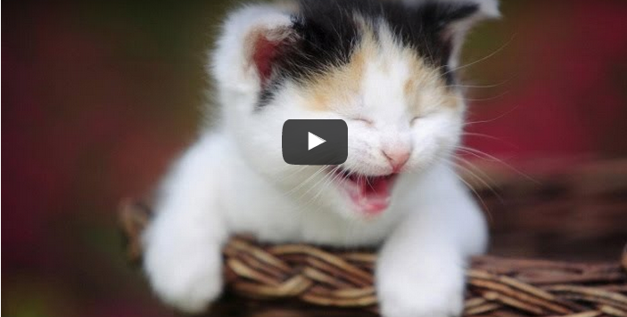 Amazing Funny video & Babies funny video : TRY NOT TO LAUGH
